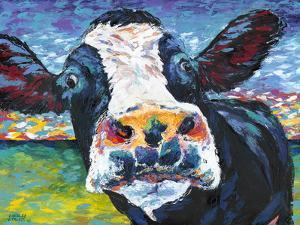 Curious Cow II by Carolee Vitaletti