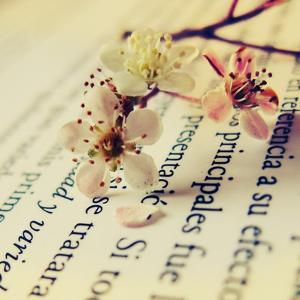 Close Up of Cherry Blossom by Carolina Hernández