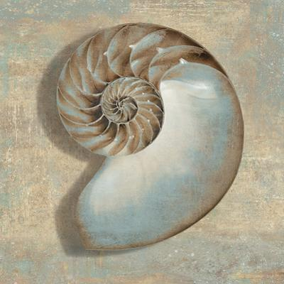 Aqua Nautilus by Caroline Kelly