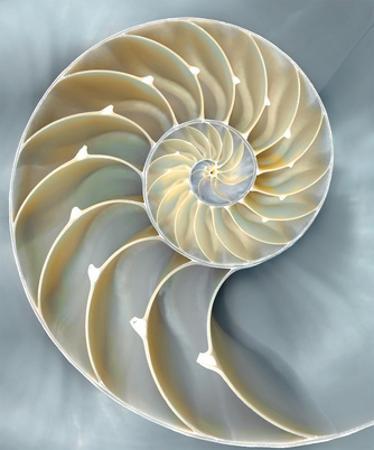Nautilus in Blue I by Caroline Kelly