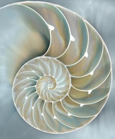 Nautilus in Blue II by Caroline Kelly