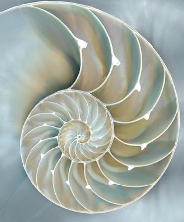 Nautilus in Blue II by Caroline Kelly