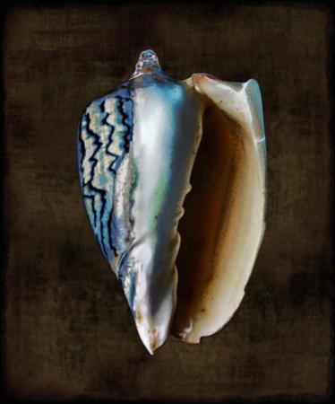 Ocean Treasure I by Caroline Kelly