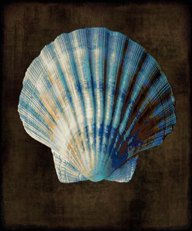 Ocean Treasure II by Caroline Kelly
