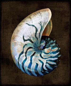 Ocean Treasure IV by Caroline Kelly