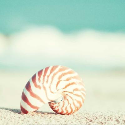 Nautilus by Carolyn Cochrane