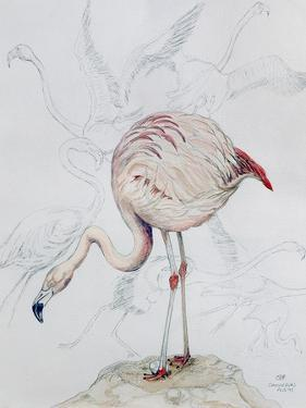 Flamingo by Carolyn Hubbard-Ford