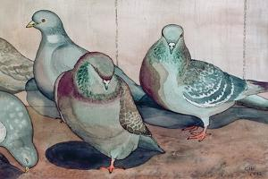 Pigeons by Carolyn Hubbard-Ford