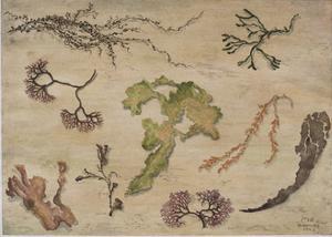 Seaweed, 1992 by Carolyn Hubbard-Ford