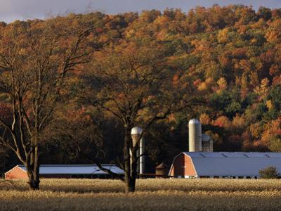 Fall Colors and a Field of Dried Soybeans in Pleasant Gap, Pennsylvania, October 20, 2006