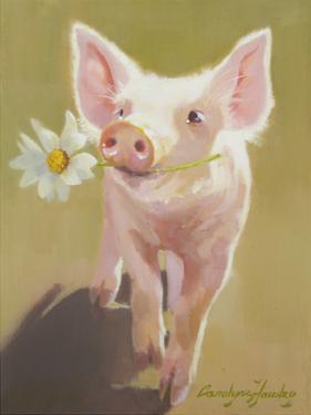 Life as a Pig IV by Carolyne Hawley