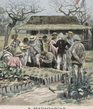 Benevolent Colonialism, in Madagascar the French Instruct the Natives in Horticultural Techniques