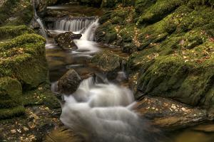 Owengarriff River, County Kerry, Munster, Republic of Ireland, Europe by Carsten Krieger
