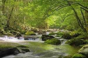Cascading Creek, Great Smoky Mountains National Park, Tennessee, USA