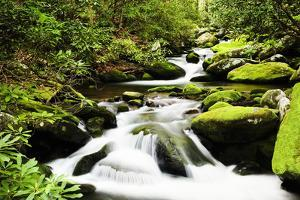 Cascading Creek in the Park, Great Smoky Mountains National Park, Tennessee, USA