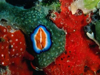 Flatworms and Other Creatures at Hannes Reef, Maldives by Casey Mahaney
