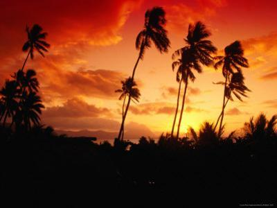 Palm Trees at Sunset, Fiji by Casey Mahaney