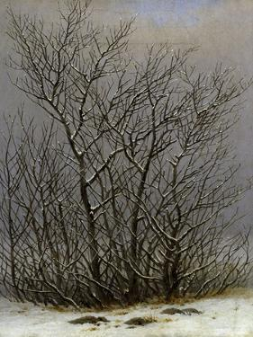 Bushes in the Snow by Caspar David Friedrich