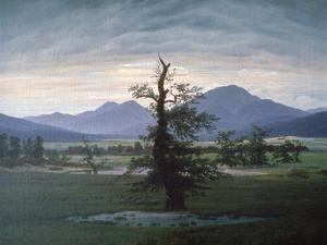 The Solitary Tree, 1823 by Caspar David Friedrich