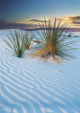 New Mexico by Cassaigne