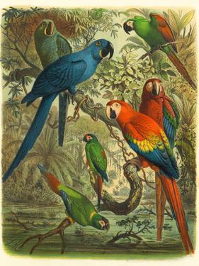 Tropical Birds III by Cassel