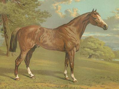 Cassell's Thoroughbred I by Cassell