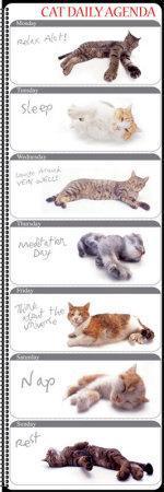 https://imgc.allpostersimages.com/img/posters/cat-agenda_u-L-EWRO20.jpg?p=0