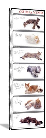 Cat Agenda-Yoneo Morita-Stretched Canvas Print