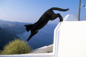 Cat- Black, Jumping Off Wall