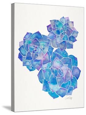 Rosette Succulents Blue by Cat Coquillette