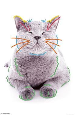 Cat - Funny Face