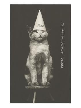 Cat in Dunce Cap