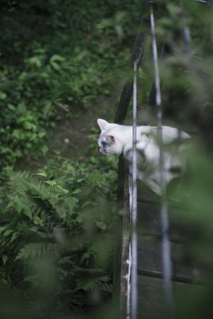 https://imgc.allpostersimages.com/img/posters/cat-on-terrace_u-L-Q1EXKXB0.jpg?artPerspective=n