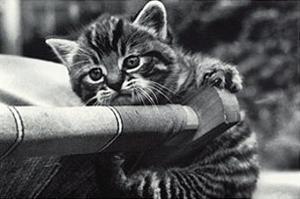 Cat Precious