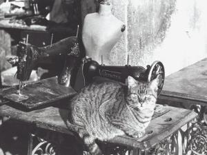 Cat, Sewing Machine and Manikin