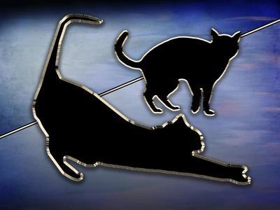 https://imgc.allpostersimages.com/img/posters/cat-stretching_u-L-Q1CQLJZ0.jpg?artPerspective=n