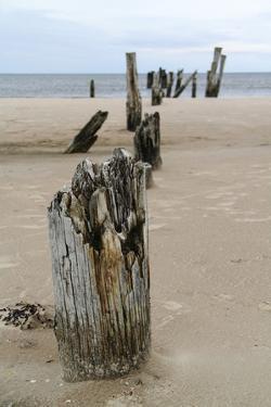 Latvia, Baltic Coast Near Cape Kolka, Slitere National Park by Catharina Lux