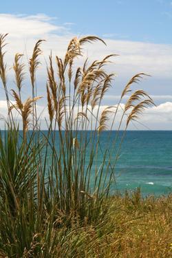 New Zealand, South Island, Coast Near Dunedin by Catharina Lux