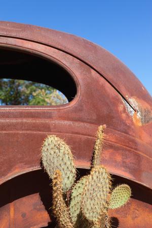 USA, Arizona, Route 66, Rusty Car Body, Cactus