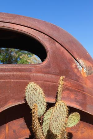 USA, Arizona, Route 66, Rusty Car Body, Cactus by Catharina Lux