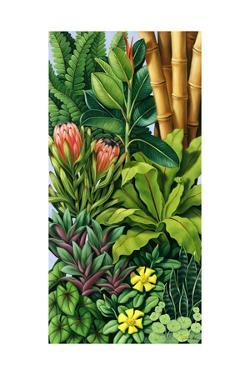 Foliage III, 2005 by Catherine Abel