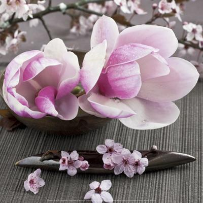 Magnolia by Catherine Beyler