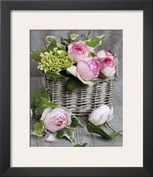 Roses by Catherine Beyler