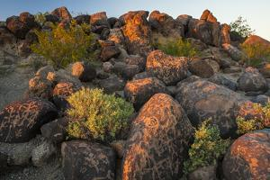 Arizona, Painted Rock Petroglyph Site. Rocks Covered with Petroglyphs by Cathy & Gordon Illg