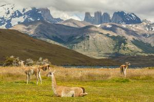 Chile, Patagonia, Torres del Paine NP. Landscape with Guanacos by Cathy & Gordon Illg