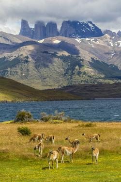 Chile, Patagonia, Torres del Paine NP. Mountains and Guanacos by Cathy & Gordon Illg