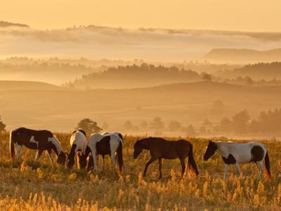 Paint Horses at Black Hills Wild Horse Sanctuary, South Dakota, Usa