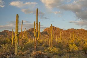 USA, Arizona, Saguaro National Park. Desert Landscape by Cathy & Gordon Illg