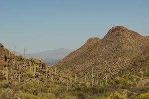 USA, Arizona, Saguaro National Park. Valley in Desert Landscape by Cathy & Gordon Illg