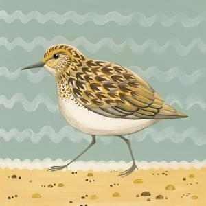 Serious Sanderling by Catriona Hall